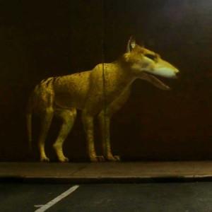 Fabulous Beasts - Thylacine